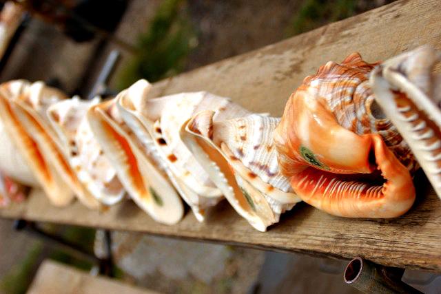 North Shore Seashells