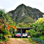 A Day in the Life: WWOOFing in Hawaii