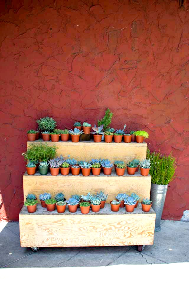 silver lake succulents.jpg