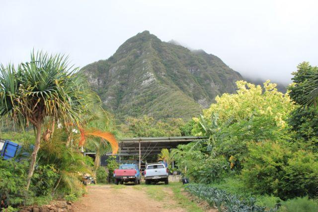 Nalolicious Farm, Waimanalo, Hawaii