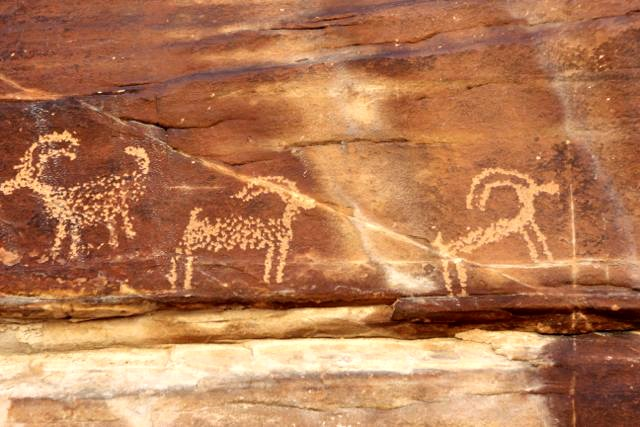 Sheep Petroglyphs in Gold Butte