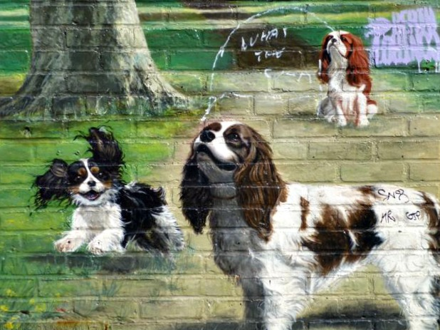 Brooklyn Street Art - Cavalier King Charles